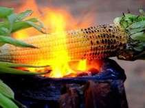 Corn - a dry food